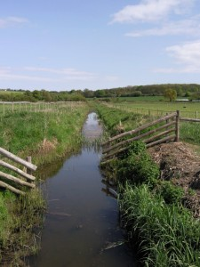 Blackwater estuary, coastal drainage ditch