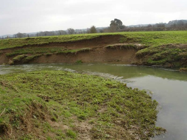 Bank erosion by livestock