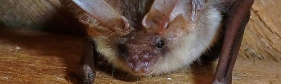 Oxfordshire Bat Emergence Surveys and Mitigation – Aitchison Raffety (formerly Brian Barber Assoc.)