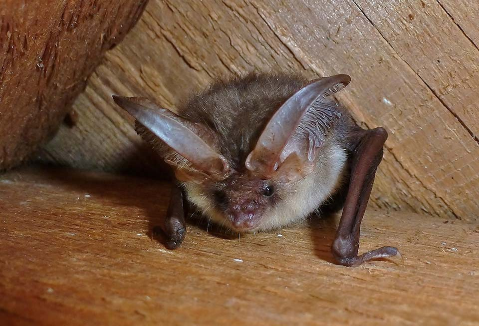 Oxfordshire Bat Emergence Surveys And Mitigation