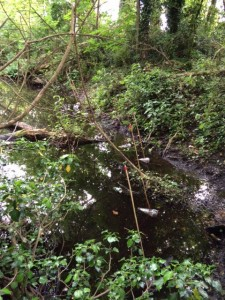 Great Crested Newt bottle traps