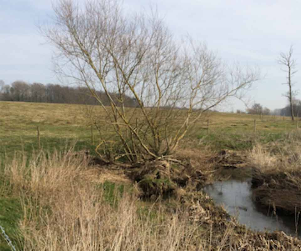 secure longevity of individual mature coppice and veteran pollarded trees