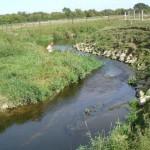 River Welland bank restoration - after