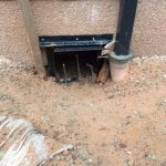 Badger gate left open at start of exclusion